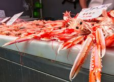Langoustines for sale on a market Royalty Free Stock Photo