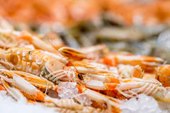 Langoustines at seafood market Royalty Free Stock Photography