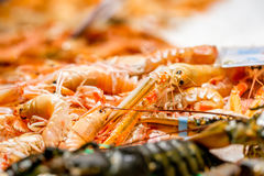 Langoustines at seafood market Stock Images