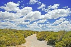 Langs de kust van Koninklijk Nationaal Park, dichtbij Sydney, Australië Stock Foto's