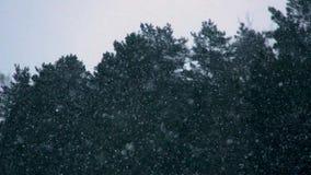 Langsam fallender Schnee blättert gegen weißen Himmel ab stock footage