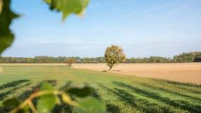 Langsam kommender Herbst lizenzfreies stockbild