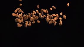 LANGSAM: Mandeln fliegen oben und fallen stock video footage