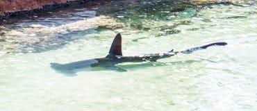 Langsam schwimmender Haifisch nah an dem Sand lizenzfreie stockfotografie