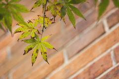 Langsam verwelkte Blätter Lizenzfreie Stockfotografie