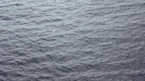 Langsame Bewegung Draufsicht von den gemeinen Seemöwen, die auf das Mittelmeer fliegen, sehen stock video