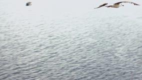 Langsame Bewegung Draufsicht von den gemeinen Seemöwen, die auf das Mittelmeer fliegen, sehen stock footage