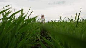 Langsame Bewegung Kleines Mädchen, das auf dem grünen Feld läuft stock video footage