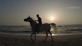 Langsame Bewegung Pferdefahrten entlang dem Strand stock footage