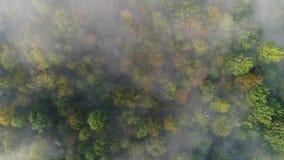 Langsame gerade unten steigende Vogelperspektive nebeligen Pennsylvania-Holzes stock video