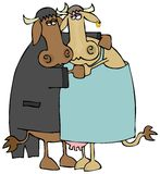 Langsame Tanzen-Kühe Stockfotos