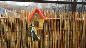 Langsamer Flug eines Vogels Langsame Bewegung stock video