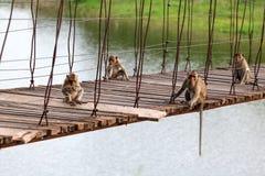 Langschwänziger Affe, der auf der alten Hängebrücke mit gre sitzt Stockbild