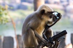 Langschwänziger Affe, der im Spiegel des Mopeds anstarrt Lizenzfreie Stockbilder