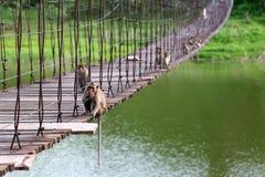 Langschwänziger Affe oder Krabbe-essen Makaken, der auf dem alten Sus sitzt Lizenzfreies Stockfoto