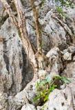 Langschwänziger Makaken-Affe im Wald Lizenzfreie Stockfotografie