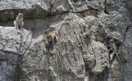 Langschwänziger Makaken, die kletternden Affen und sitzen auf einem Felsenberg Stockfoto