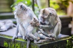 Langschwänziger Makaken mit ihrem Kind Lizenzfreies Stockfoto