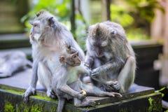 Langschwänziger Makaken mit ihrem Kind Lizenzfreie Stockfotos