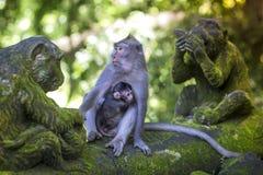 Langschwänziger Makaken mit ihrem Kind Lizenzfreie Stockfotografie
