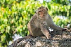 Langschwänziger Makaken, in Thailand, Saraburi ein Naturschutzgebiet, Lizenzfreies Stockfoto