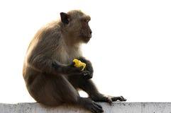 Langschwänziger Makakenmann, der auf Wand mit Lebensmittel sitzt Stockfotos