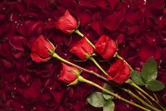 Langstielige Rosen auf einem Bett von rosafarbenen Blumenblättern Stockbilder