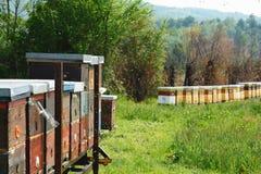 Langstroth bikupauppsättning på en järnplattform Selektivt fokusera Arkivbild