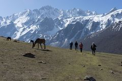 Backpackers and horses in Nepal climbing muntains. Langtang trek valley adventure in Nepal Royalty Free Stock Image