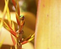 Langue de gecko Photos stock