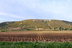 Languedoc-Roussillon vineyard Stock Photography