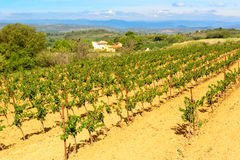 Languedoc Roussillon  vineyards around Beziers Herault France Royalty Free Stock Photography