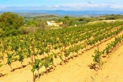 Languedoc Roussillon vingårdar runt om Beziers Herault Frankrike Royaltyfri Fotografi