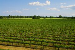 Languedoc vineyard. In south of france Stock Image
