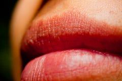 Languettes Image stock