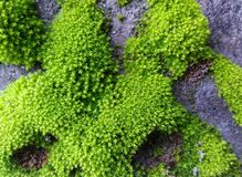 Languettes vertes Photos libres de droits