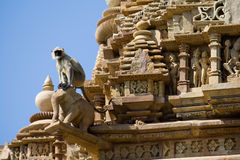 Langur (Colobinae), tempie di Khajuraho. Fotografie Stock Libere da Diritti