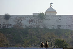 Langur zwei bei Shri Nathji Temple Stockfotografie