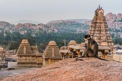 Langurs indios que se sientan en el punto de visión en Hampi, Karnataka, la India Foto de archivo