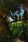 Langurs monkeys Royalty Free Stock Images