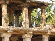 Langurs Presbytis-entellus herein, Karnataka, Indien Stockfoto