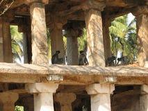 Langurs Presbytis-entellus herein, Karnataka, Indien Stockfotografie