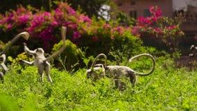 Langurs que vivem na cidade Os povos aqui associam langurs com o senhor hindu Hanuman do deus e honrar-los, Jodhpur, Índia foto de stock royalty free