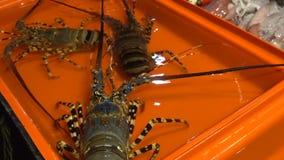 Langust vivant montré dans l'aquarium au restaurant banque de vidéos