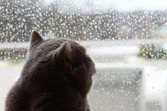 Langweilige Katze lizenzfreies stockbild