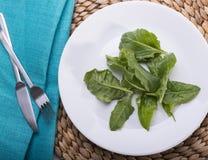 Langweiliger Salat Stockbilder