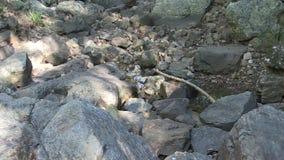 Langzaam gezoem in vondstenbezinning in vulklei tussen rotsen stock video