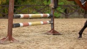 Langzaam motiepaard die over hindernis springen stock videobeelden