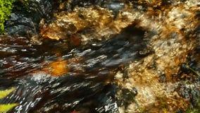 Langzaam motiewater in een stroom stock video
