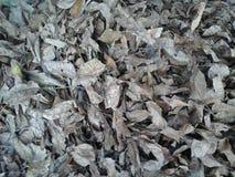 Langzaam verdwenen Bladeren stock afbeeldingen